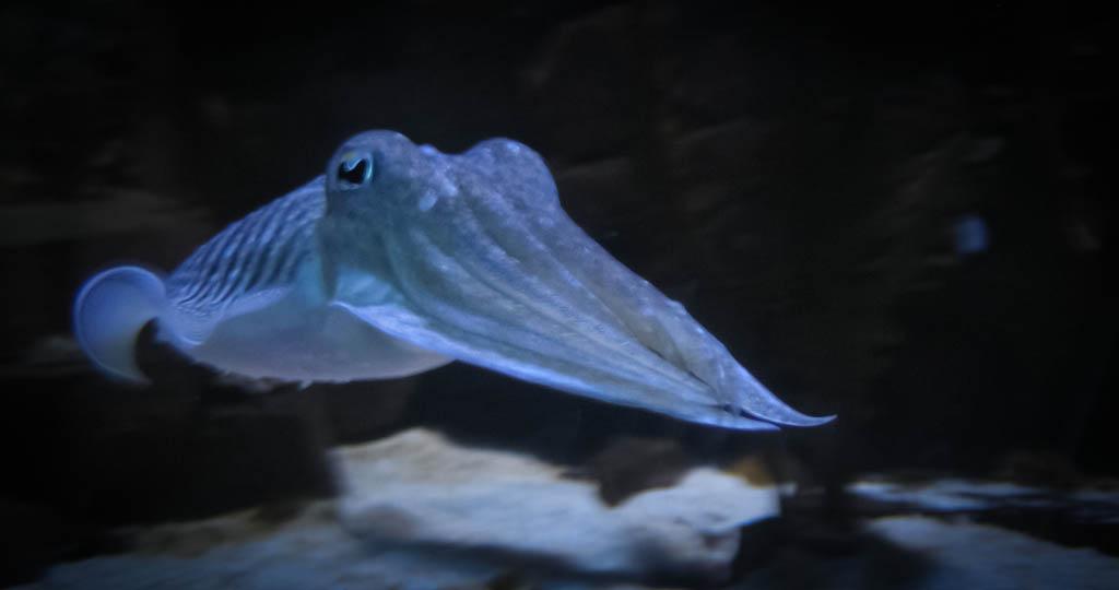 zoo aquarium berlin  aktivitäten für kinder bei regen