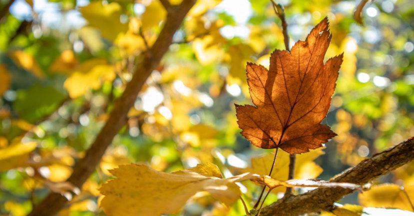 Was kann man in den Herbstferien machen?